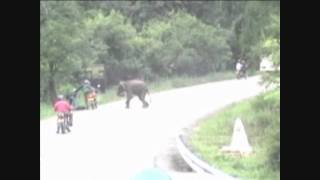 getlinkyoutube.com-Elephant attacking a motorbike