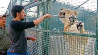 Feeding My Friends LION !!!