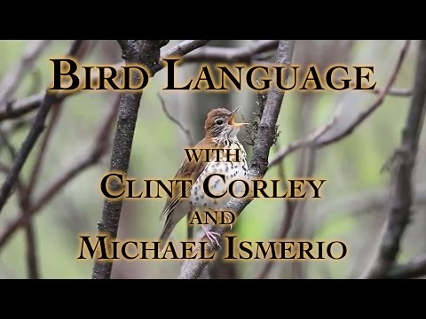 Bird Language with Clint Corley and Michael Ismerio