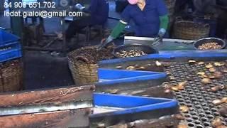 getlinkyoutube.com-automatic cashew cutting machine
