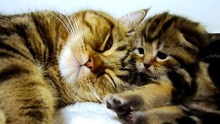 getlinkyoutube.com-Mom Cat Talking to her Cute Meowing Kittens  20 min BONUS Video