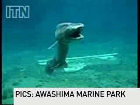 Prehistoric Shark Captured On Film