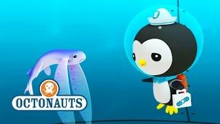 getlinkyoutube.com-Octonauts: Help Out Flying Fish