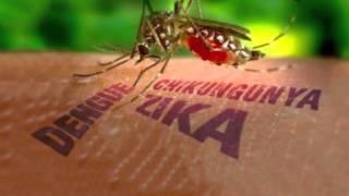 getlinkyoutube.com-Mosquito puede transmitir 4 enfermedades juntas entre ellas Zika y Chikungunya