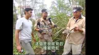 getlinkyoutube.com-大蟒蛇
