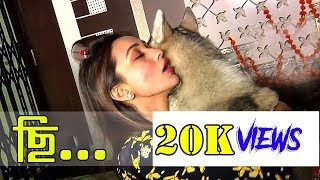 Mimi Chakraborty Hot Scene With Dogs