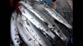 getlinkyoutube.com-Pesca sub Ceará - Expedição Barracuda