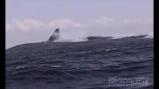 getlinkyoutube.com-Megalodon GIANT SHARK