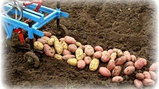 getlinkyoutube.com-Картофель выращенный на сене