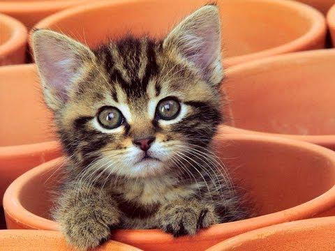 [Cute cats] Ảnh mèo xinh - Những chú mèo dễ thương