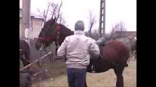 getlinkyoutube.com-Botezul cailor de Boboteaza in Baraganul buzoian - obicei pastrat din stramosi