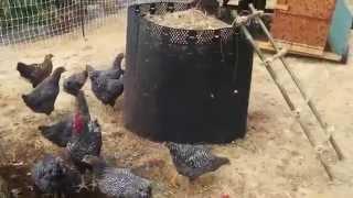 getlinkyoutube.com-Poultry Powered Compost Conveyor -P2C2