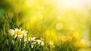 getlinkyoutube.com-Morning Relaxing Music - Uplifting Feeling and Positive Energy
