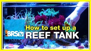 getlinkyoutube.com-How to start a 20 gallon nano reef tank #fusion20 | Innovative Marine Nuvo 20