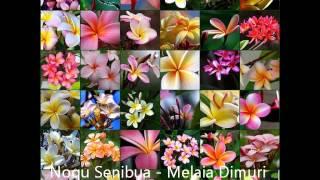 Noqu Senibua - Melaia Dimuri (Di Cegu) Tribute