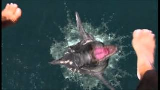 getlinkyoutube.com-Decades of Horror: Dinoshark