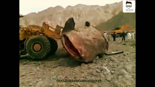 getlinkyoutube.com-شاهد اكبر سمكة جري بالعالم تبلغ 15 طن شي لايصدق