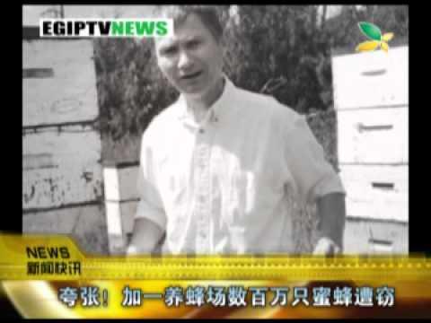 CQTV:夸张!加一养蜂场数百万只蜜蜂遭窃