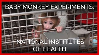 getlinkyoutube.com-Baby Monkey Experiments Exposed | National Institutes of Health