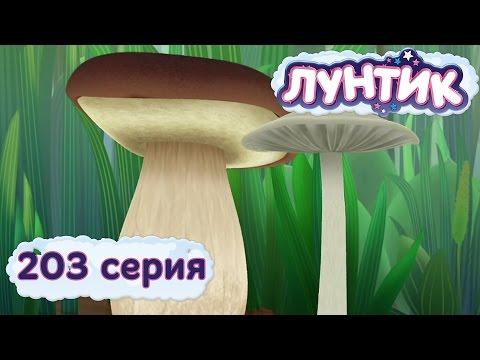 203 серия. Белый гриб