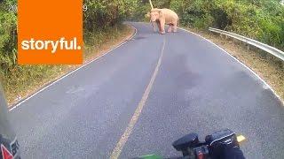 getlinkyoutube.com-Motorcyclist Has Encounter with Curious Elephant (Storyful, Crazy)