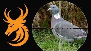 getlinkyoutube.com-Pigeon shooting: Shotgun vs Airgun