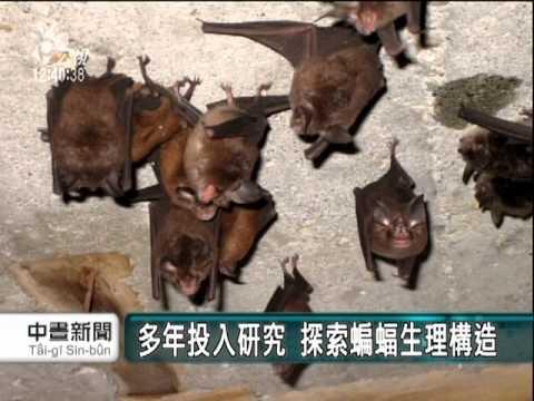 超聲波回聲定位 蝙蝠飛行不相撞