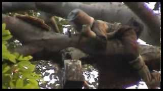 getlinkyoutube.com-ผึ้งผีกับคนป่า ภาค 2