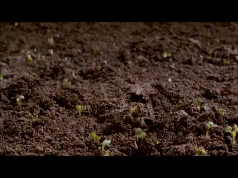 Dirt! The Movie Trailer