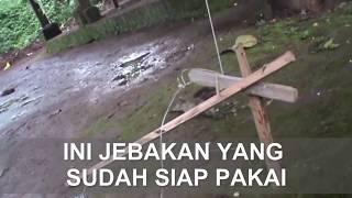 getlinkyoutube.com-CARA MEMBUAT JEBAKAN | BURUNG  |  AYAM HUTAN