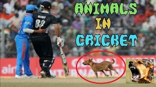getlinkyoutube.com-Top 10 Funny Moments with Animals In Cricket Match