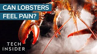 Why-Do-We-Boil-Lobsters-Alive width=