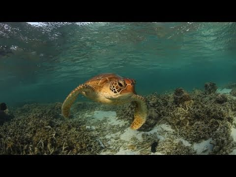 Lady Elliot Island Travel Video Guide, Great Barrier Reef Queensland