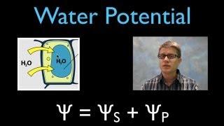 getlinkyoutube.com-Water Potential