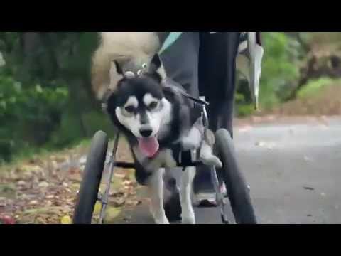 Incrível Prótese para Cão Criada em Impressora 3D