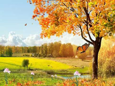 Beautiful Nature Animated Wallpaper
