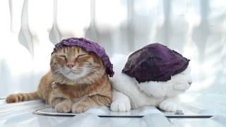 Кошки! Ношение капустного листа вместо шапки