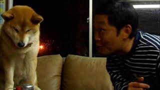 Mari-Kun: Shiba Dog That Rejects