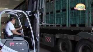 getlinkyoutube.com-Промышленное выращивание редиса (Израиль)