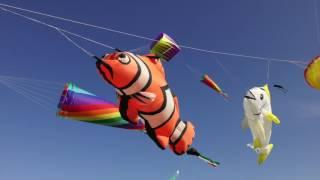 getlinkyoutube.com-Kuwait kites team in Shwek Beach 13-1-2017