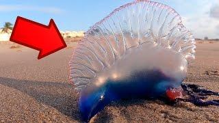 ¡Si Ves esto en La Playa Huye! CORRE No es lo que piensas...