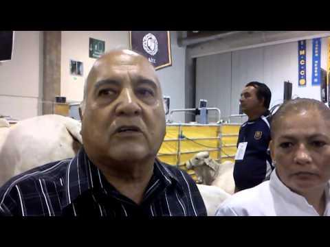 Visitante a la Expo Ganado Cebu Guerrero 2013-opina sobre los eventos que impulsa el Gobernador