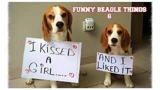 "getlinkyoutube.com-Funny ""Beagley"" Things! Why You Should Get A Beagle Dog. Episode #6"