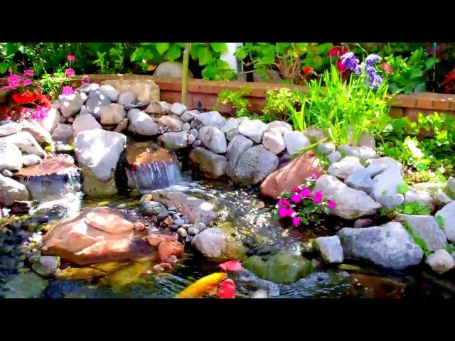 Los Angeles Most Beautiful Koi Pond