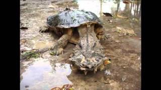 getlinkyoutube.com-Unbekannte Kreaturen: Schaurige Wesen unseres Planeten