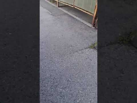 Гул при движении назад