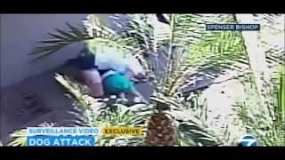 getlinkyoutube.com-Valiente madre salva a su hijo del ataque de feroces perros