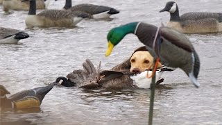 getlinkyoutube.com-Missouri River Duck Hunting 2015
