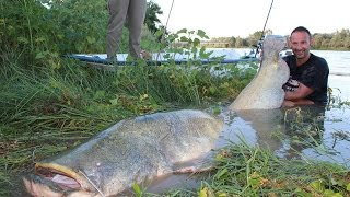 getlinkyoutube.com-CATFISH MONSTER VS SMALL SPINNING ROD - 260 POUNDS X 2,53 METERS by YURI GRISENDI