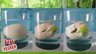 getlinkyoutube.com-Nacimiento de dinosaurio de juguete   Huevo dinosaurio de juguete   Vídeos de dinosaurios para niños